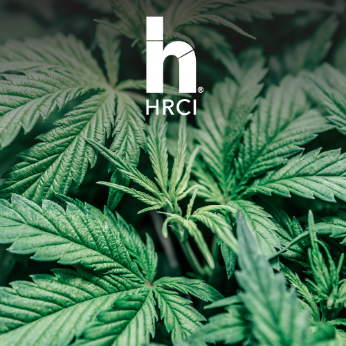 HR Hot Topic Marijuana and the Workplace